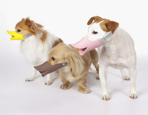 quack-dog-muzzle-1